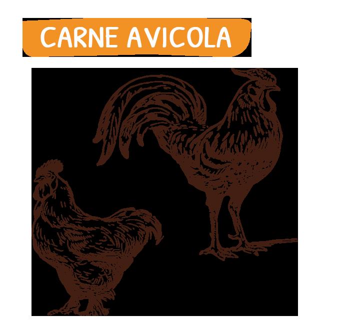 home_carne_avicola