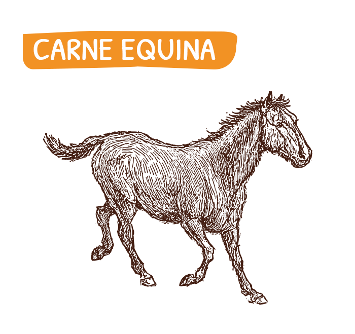 home_carne_equina