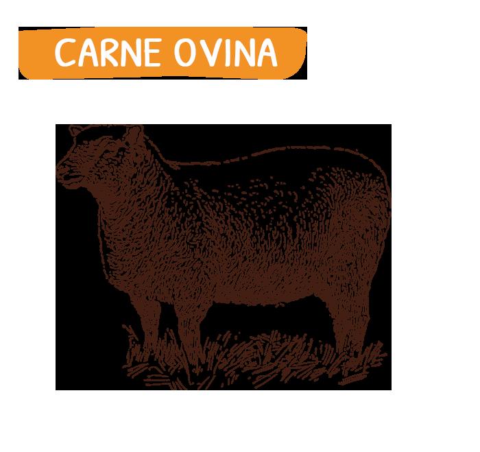home_carne_ovina