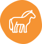 icon__0002_equina